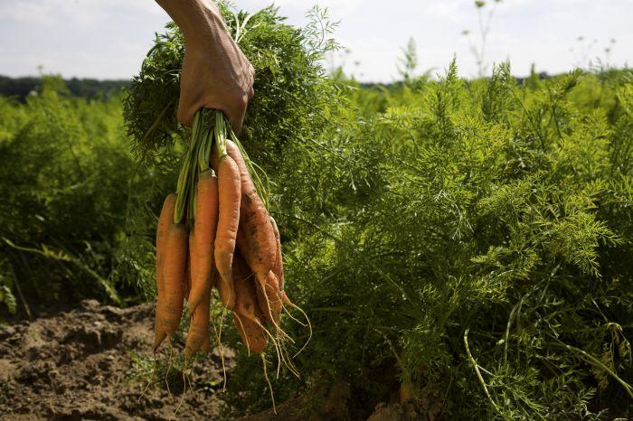 ekologiškas maistas internetu